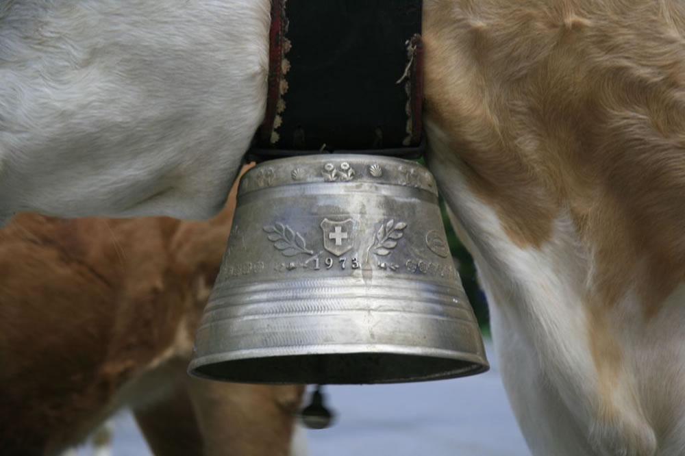 koe-bel-zwitserland